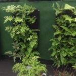 A Fern Wall I saw at Bloom - Great for Shade