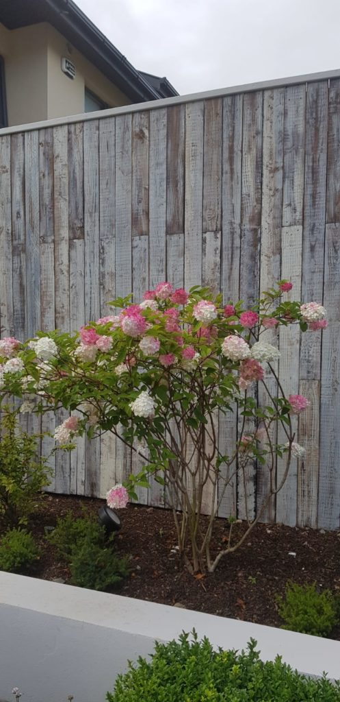 Bespoke Rustic Wooden Fence built specifically for a Japanese style garden which when lit looks even better. It is against a b=very unusual hydrangea called Vanilla Fraise.